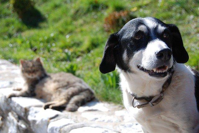 犬や猫の便秘、ウンチが出ない時の要点
