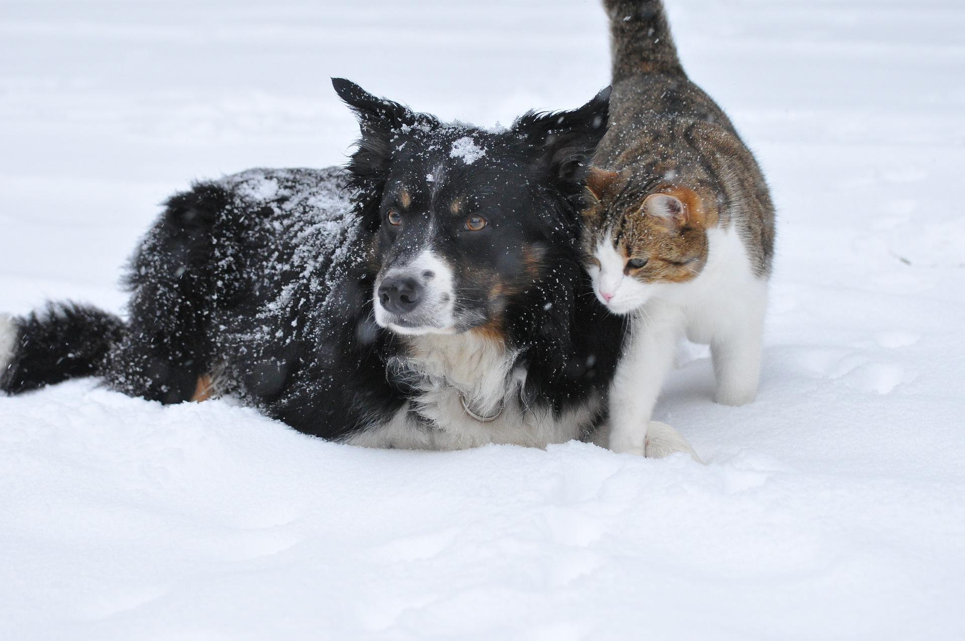 犬と猫の副甲状腺機能低下症