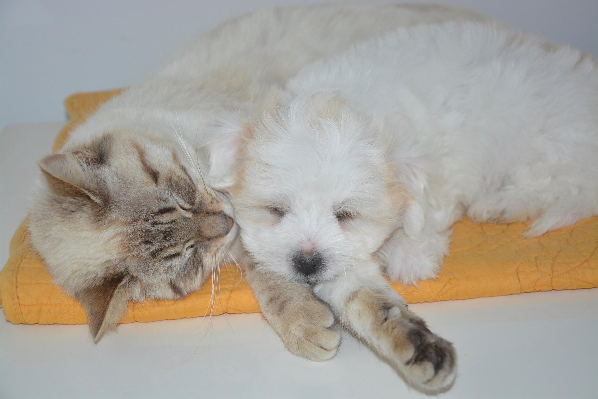 犬と猫の副甲状腺機能低下症の臨床症状