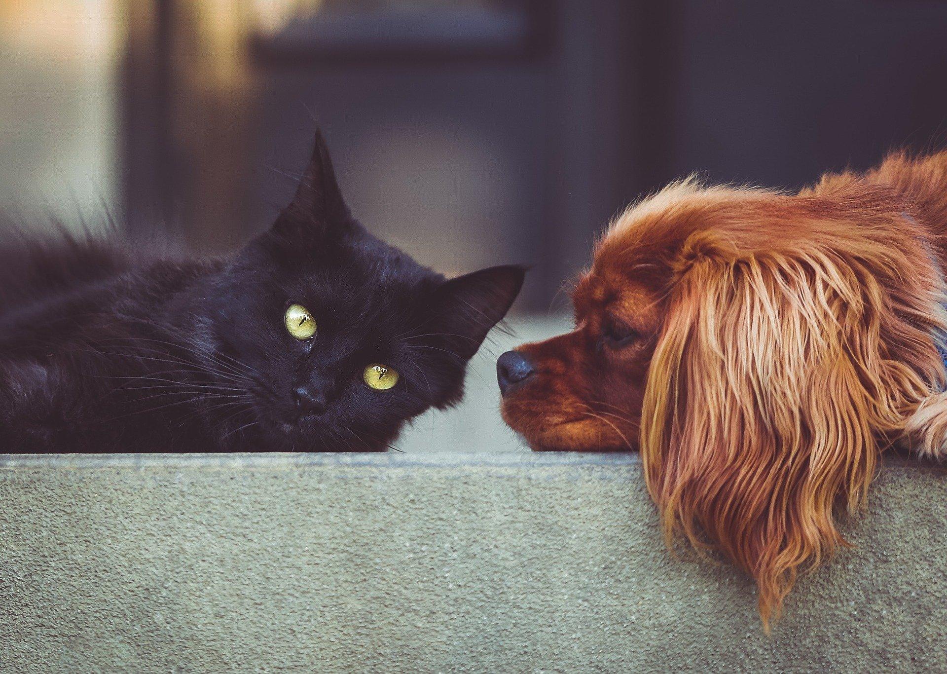 犬と猫の低Ca 血症の鑑別診断