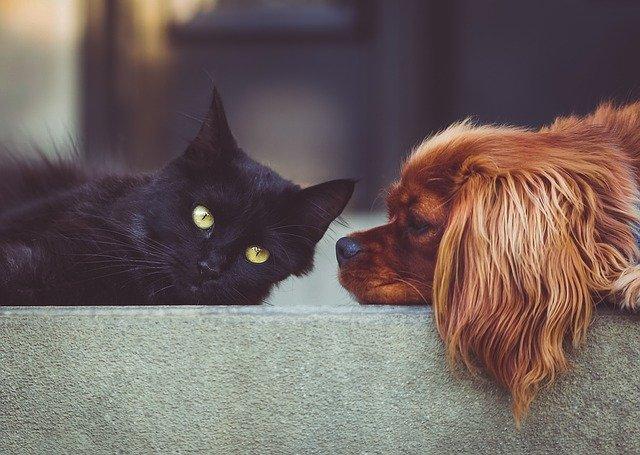 犬や猫の食欲異常(食欲不振・廃絶・多食)の対症療法