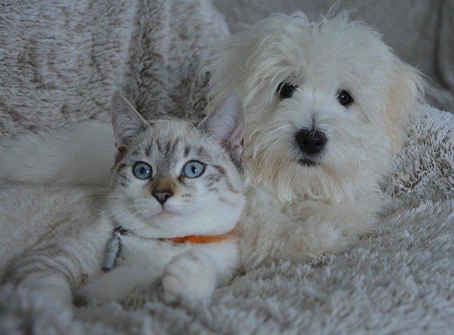 犬や猫の耳が聞こえない?耳が遠い:難聴の病理発生