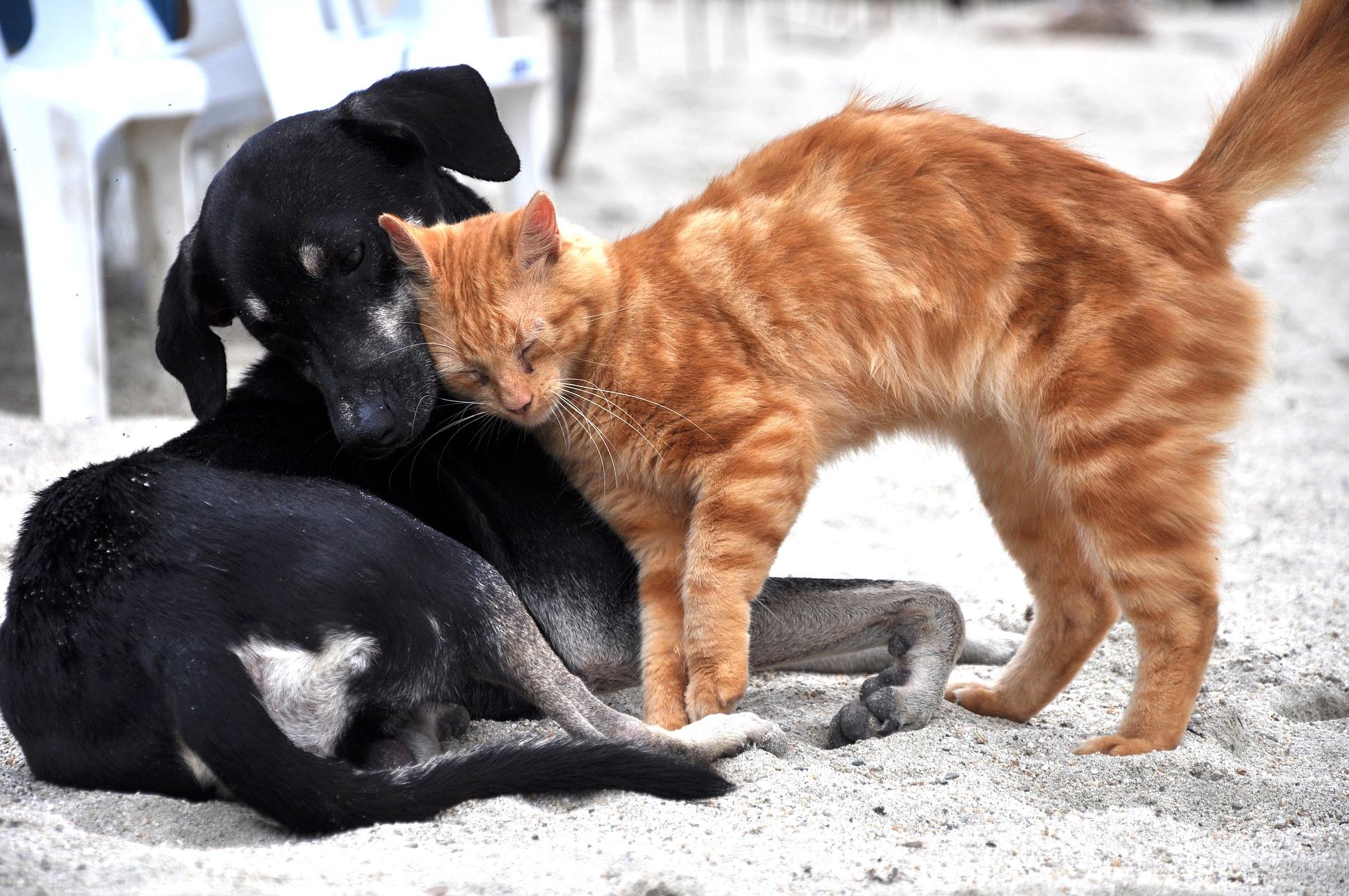 犬と猫の副甲状腺機能低下症の原因