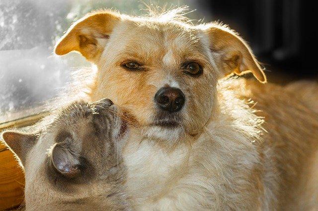 犬や猫の脱水の症状