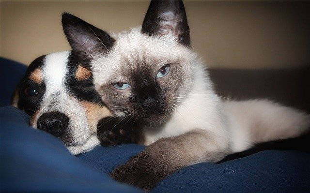 犬や猫の便秘、ウンチが出ない時の病理発生