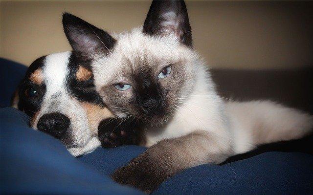 犬や猫のおしっこ・尿が多い、少ない、しない場合の要点