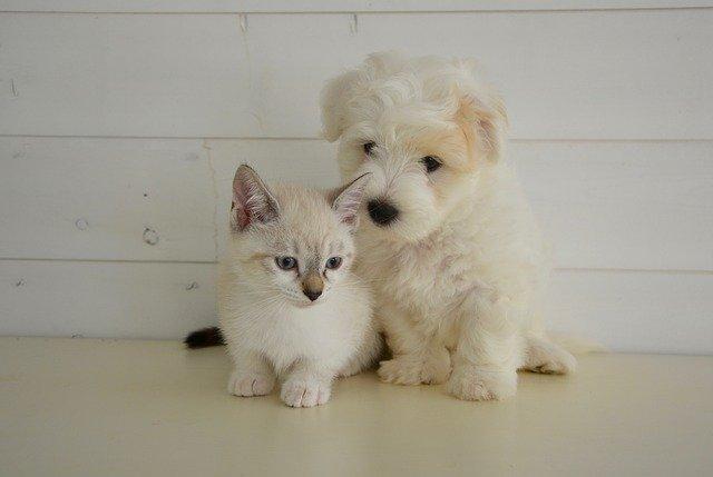 犬や猫の脱水症状の病理発生