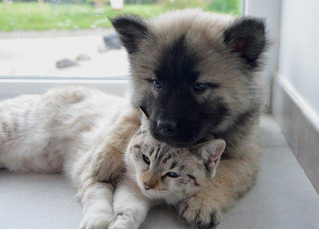 犬や猫のおしっこ・尿の測定方法
