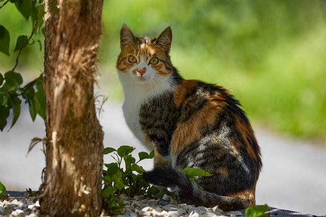 猫の鈎虫症の宿主
