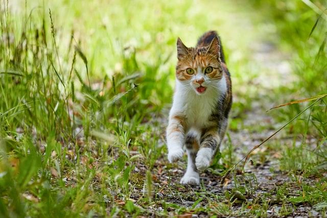 外に出る猫はどのようなところでリスクがあるのか