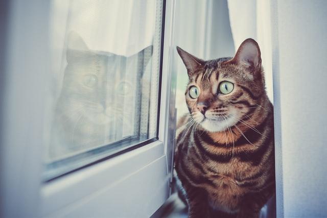 猫のミミヒゼンダ二感染症の臨床症状