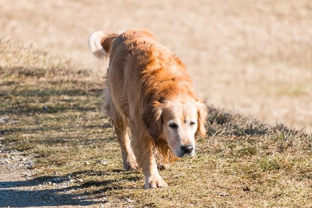 犬の皮膚糸状菌症の予防