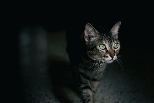 「飼い猫から人への感染を防ぐには」