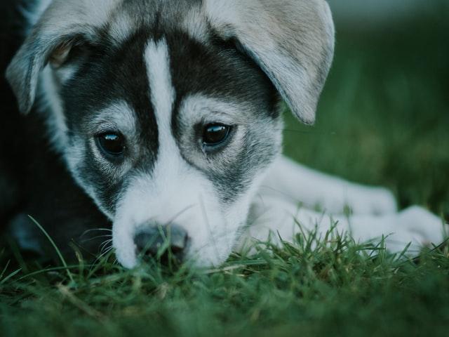 犬の尿崩症の検査