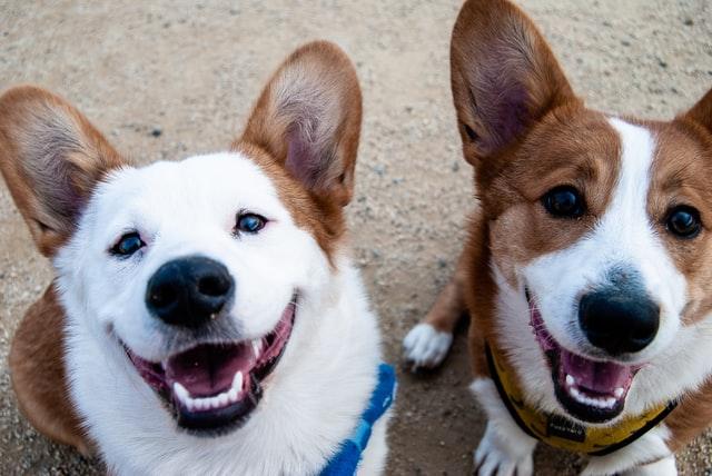 犬のニキビダニ症の予防