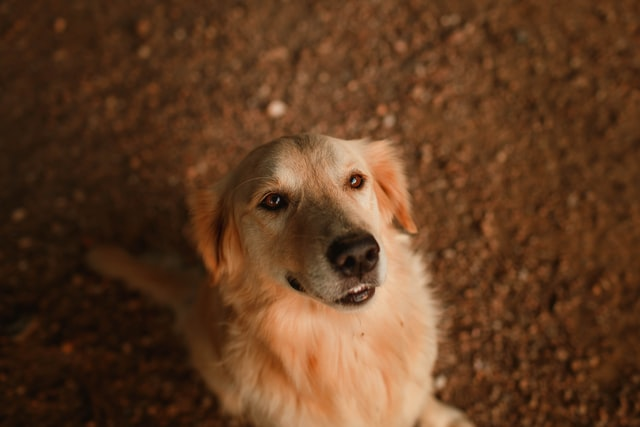 獣医師解説!犬の尿崩症〜原因、症状、治療法〜