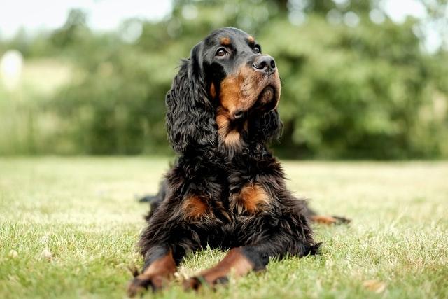犬アトピー性皮膚炎のまとめ