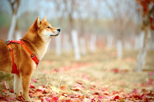 犬の尿崩症の症状