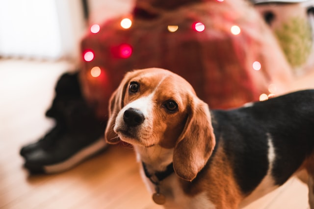 犬のネギ中毒の予防