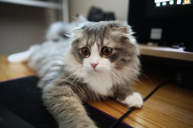 猫免疫不全ウイルス感染症(FIV)の宿主