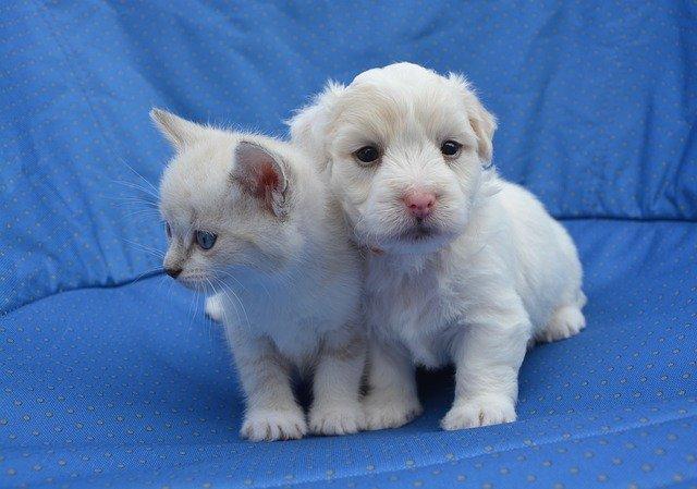 犬や猫のおしっこが赤い、出血、血尿、茶色い分類と問題点