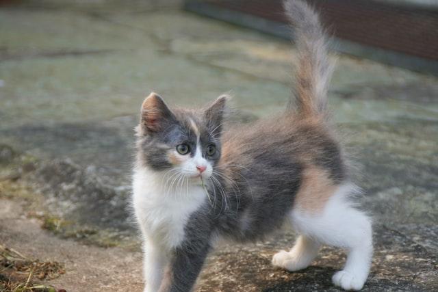 猫免疫不全ウイルス感染症(FIV)の感染経路