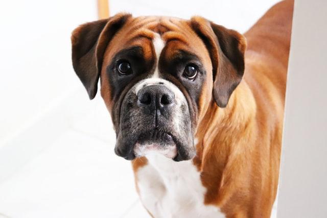 犬の多飲、水をよく飲む病気の特徴