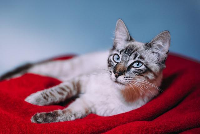 獣医師解説!猫の結石におすすめのフード:ユリナリーとpHコントロールの違い