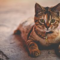 猫のトリコモナスの感染経路