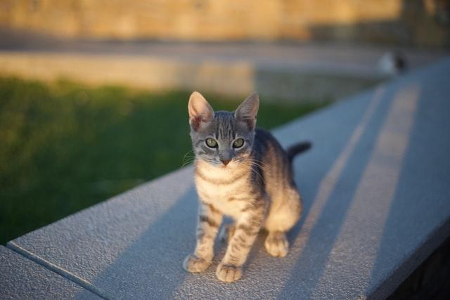 猫のジアルジア症の治療