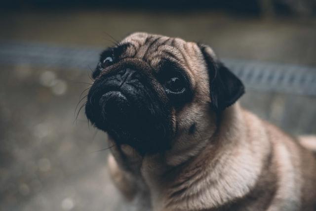 犬の鼻腔異常(鼻血、鼻水)の特徴
