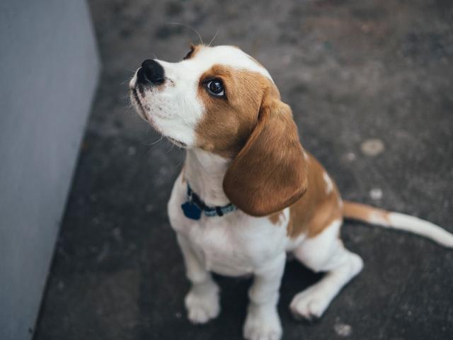 犬のマンソン裂頭条虫症の予防