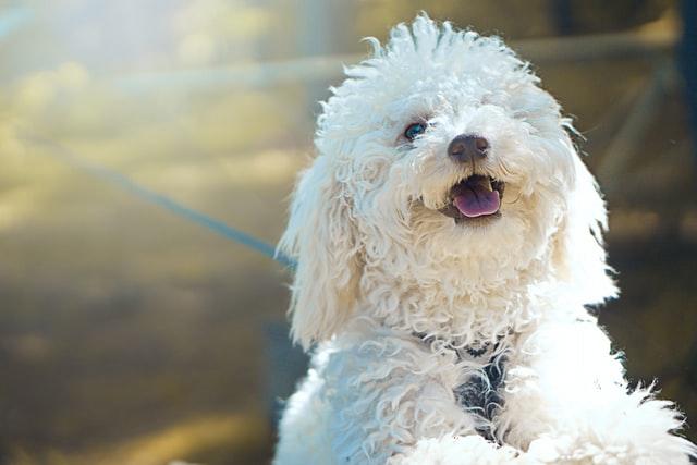 犬の多飲、水をよく飲む病気の対症療法