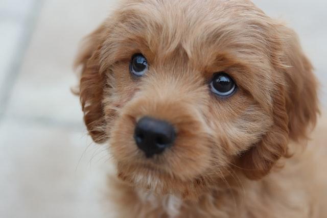 犬のくしゃみの対症療法
