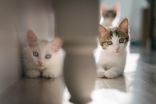 猫のクッシング症候群の病因<
