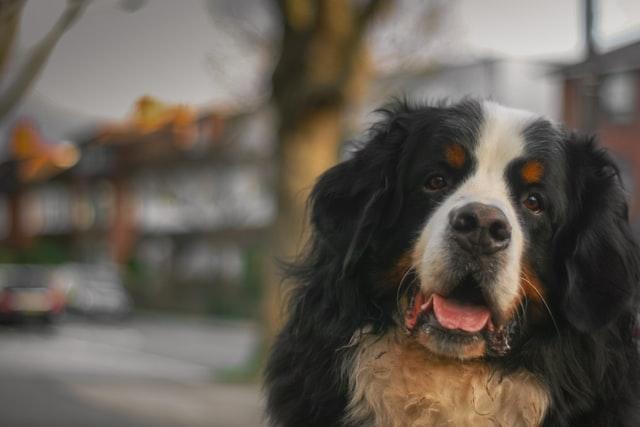 獣医師解説!犬の目やに、眼脂が多い?〜原因、症状、治療法〜
