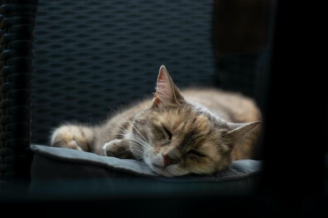 猫のトキソプラズマ症の感染の特徴