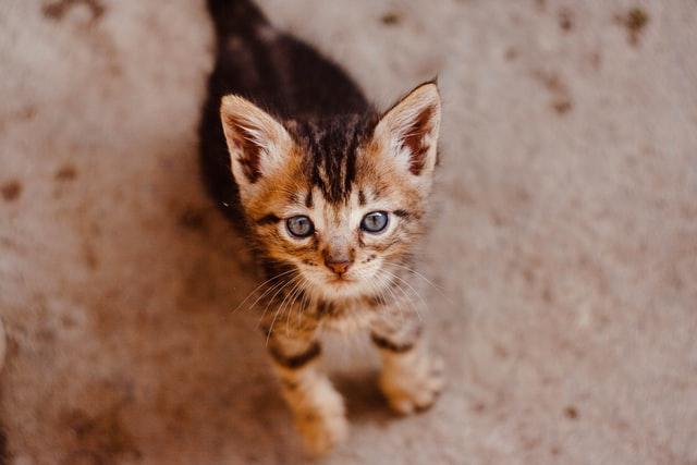 猫のニラ中毒の予防