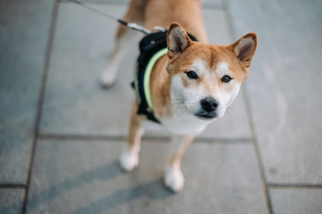 犬の皮膚糸状菌症の発症機序