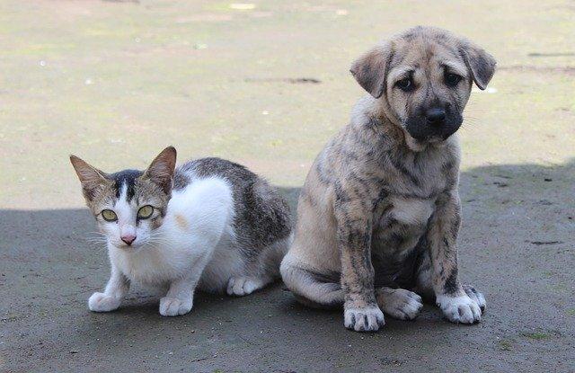 犬や猫が真っ直ぐ歩けない?立てない?:運動失調の定義