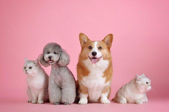 犬や猫の便秘、ウンチが出ない時の高頻度の疾患