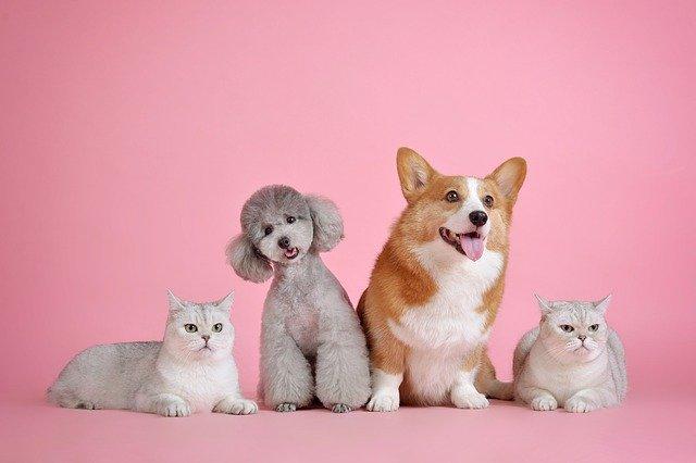 犬や猫が真っ直ぐ歩けない?立てない?:運動失調の高頻度の疾患
