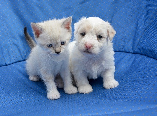 犬や猫の便秘、ウンチが出ない時の特徴