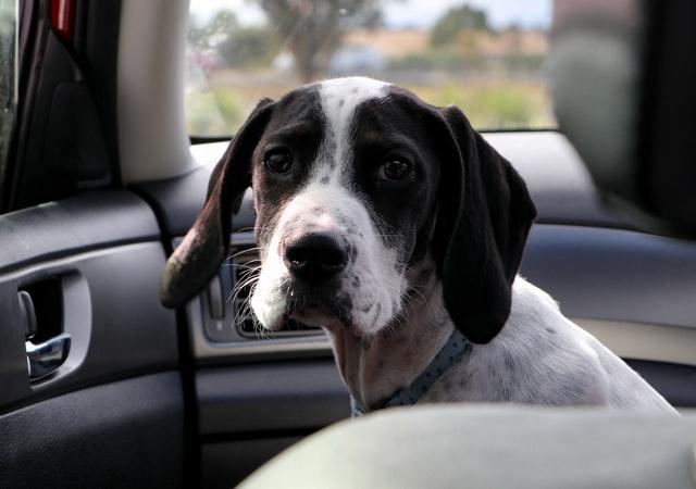 犬のインスリノーマの検査