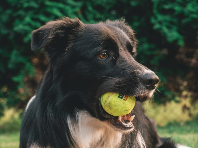 獣医師解説!犬のコクシジウム症〜原因、症状、治療法〜