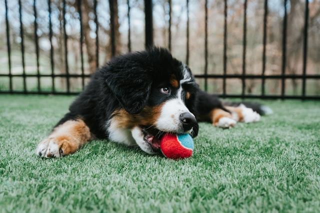 犬の散歩時にはどのようなところでリスクがあるのか