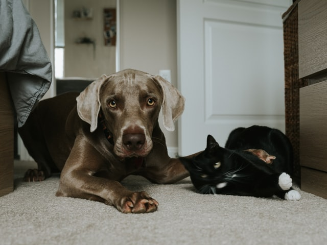 犬や猫の便秘、ウンチが出ない時の問題点