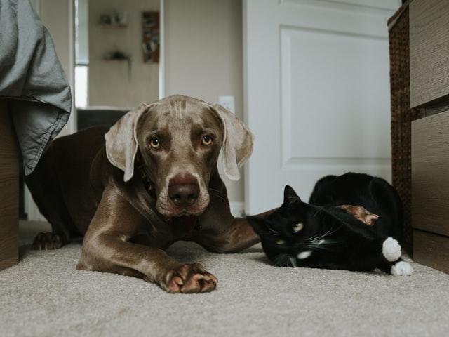 犬や猫のおしっこ・尿が多い、少ない、しない場合の高頻度の疾患
