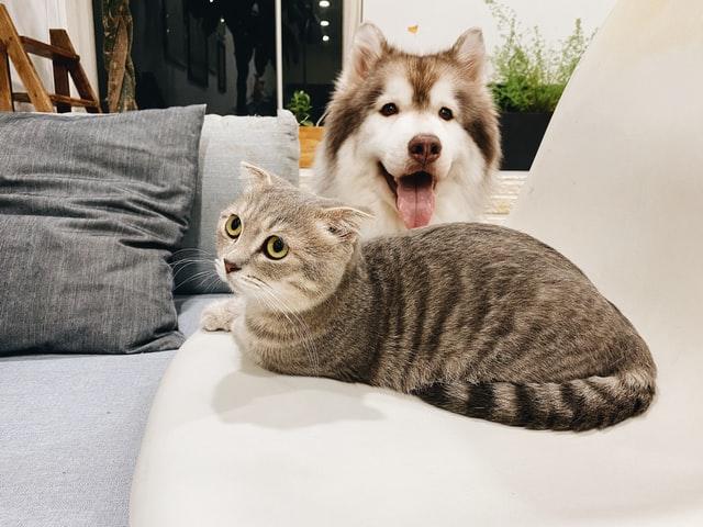 「犬と同居する上でどのような注意が必要か」