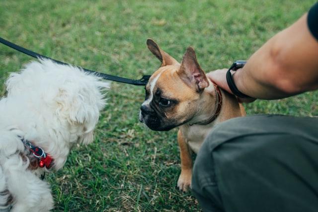 犬のメタゴニムス症の診断
